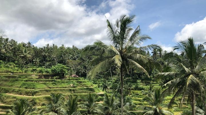Alderina Tegalalang Ubud Bali